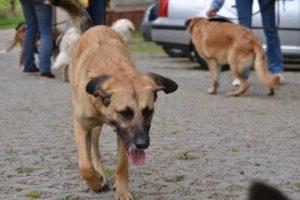 Stress bei Hunden: erkennen und helfen