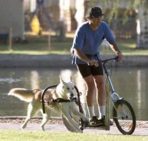 Dogscooter - Tretroller für Hunde und Menschen die aktiv sein wollen