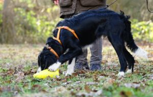 Spiele-Spaß für Hund und Halter- auch für schlechtes Wetter im Haus